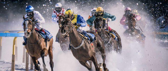sportpaard in topconditie
